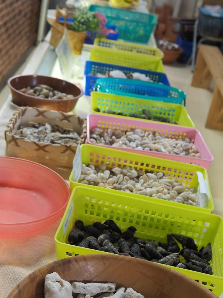 素材は色々な形の貝から選べるよ