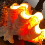 シャコガイでシェルランプを作ってみた結果→ロマンチック過ぎたw